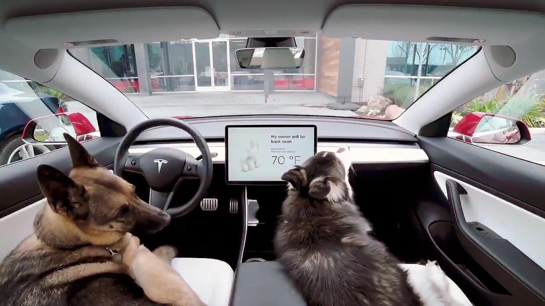 Tesla позаботилась о питомцах клиентов выпустив режим «Dog Mode»